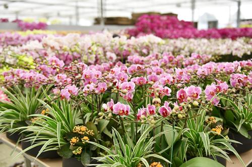 春节去广州旅游感受被鲜花包围的浪漫
