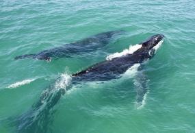澳大利亚/新西兰/凯恩斯/墨尔本观鲸13日游(怀托摩萤火虫)