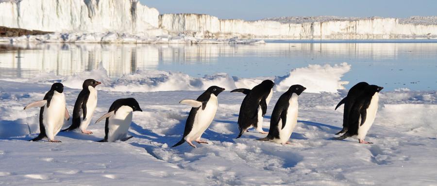 (亚特兰蒂邮轮)中国人包船南极摄影巡游16日游