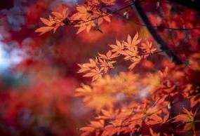 纯玩巫山国际红叶节•神女天路/云阳龙缸•云端廊桥二日游