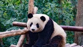 广州长隆野生动物园+欢乐世界/飞鸟乐园 双飞3日游