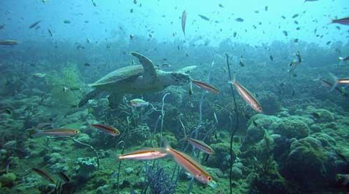 澳大利亚+凯恩斯+墨尔本全景9yabo亚博官网(梦幻世界/绿岛大堡礁/直升机体验)
