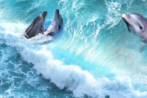 墨尔本旅游_澳大利亚双岛(海豚岛+企鹅岛)奇缘10日之旅