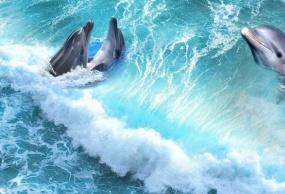 澳大利亚双岛(海豚岛+企鹅岛)奇缘10日之旅