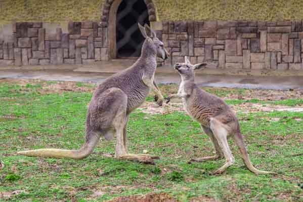 新西兰旅游_澳大利亚(含墨尔本)+新西兰南北岛14天(海陆空•中土世界奇幻之旅)
