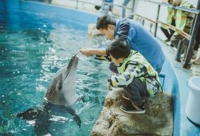 重庆市内海洋科考亲子双人研学一日营(与海豚亲密接触)